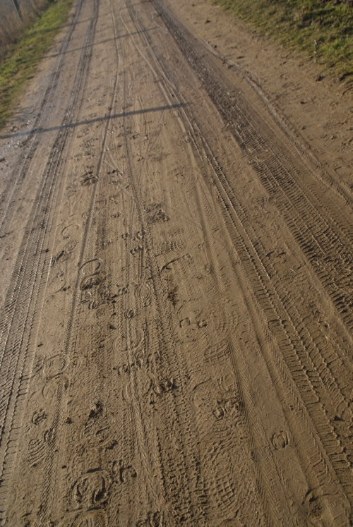 Lots of tracks on the road