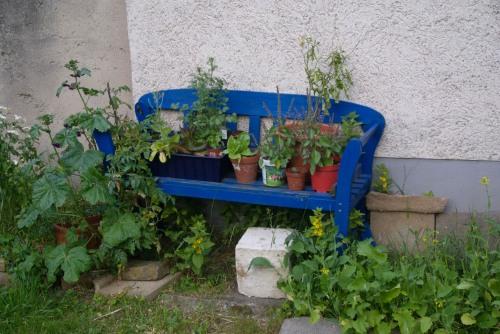 Nachher: Die Bank mit meinen Indoor-Pflanzen. Die Tomaten rechts auf der Bank wurden im Dezember gesät und trugen im März ihre ersten Tomaten.