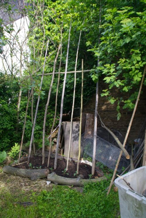 Vorher: Unser Bohnenschattenbeet soll später die Ecke beim Holunderbaum vor Sonne schützen, damit es dort auch im Hochsommer kühl bleibt.