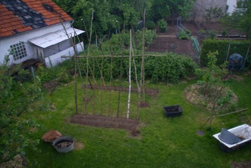 Unser Bohnenzelt am Vorabend der Abfahrt. Mais und Bohnen sind frisch gepflanzt.