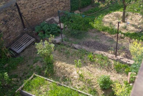 Vorher: Der Gemüsegarten. Die Beete sind besät, aber noch sieht man wenig.