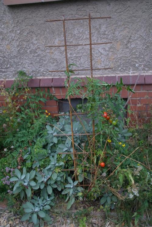 Durchgeschnittene alte Baugitter sind ganz toll, um Tomaten oder andere Pflanzen zu stützen!