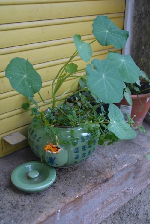 Ein unklebbar zerbrochener Teepot wird zum Blumentopf